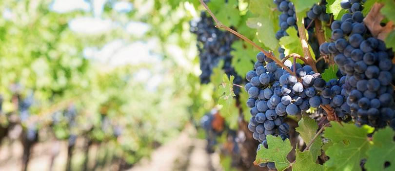 Enoteca online vivo di vino