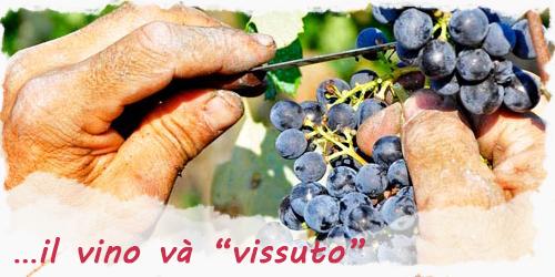 Enoteca online: il vino và vissuto