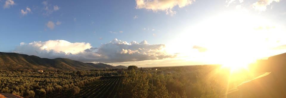 Veduta vitigni Masseria Felicia